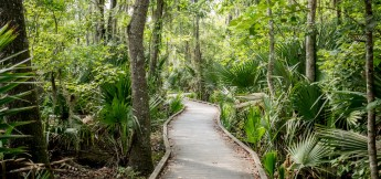 Jean Lafitte National Park a New Orleans Swamp